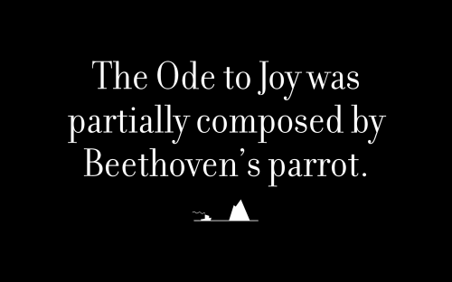 The Ode to Joy was partially composed by Beethoven's parrot.