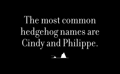 The most common hedgehog names are Cindy and Philippe.